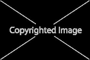 207175665_Giant-Landscape-3x2-L